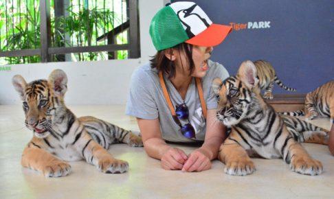 パタヤ タイガーパーク 観光